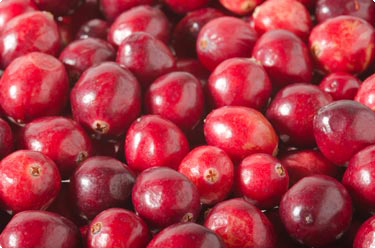 Cranberries Beeren